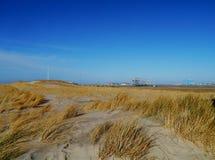 Maram gräs i dyerna av Nederländerna Royaltyfria Foton