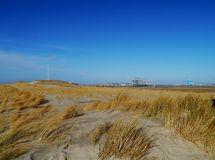 Maram grass in the dunes of the Netherlands Royalty Free Stock Photos