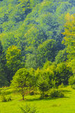 Maramures. Landscape from Maramures in the north of Romania Stock Image