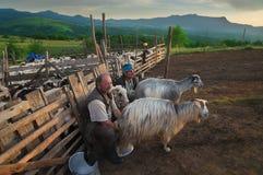 Maramures, Romênia - 22 de junho de 2016: Os visitantes pet um cavalo nas montanhas Carpathian durante o por do sol Pastores freq fotografia de stock royalty free