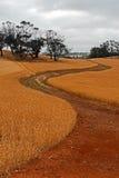 Marananga土路通过麦田在巴罗莎山谷在澳大利亚 免版税库存照片