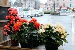 Maranello Italien - 03 26 2013: Sikt av gatorna av Maranello royaltyfri foto