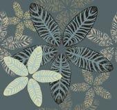 Maranta leaves pattern Stock Image