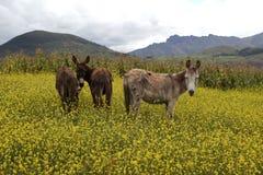 Maras, peru. The countryside in the maras twon Stock Photos