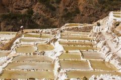 Maras solankowych kopalni peruvian Andes Cuzco Peru Zdjęcia Stock