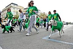 Marathon avec des amis de chien Photos stock