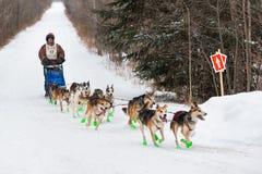 Marathon 2015 de Beargrease Denis Tremblay sur la traînée Photos libres de droits