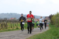 Marathon Deutsche Weinstrasse Royalty Free Stock Images