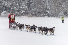 Maratona 2015 de Beargrease Nathan Schroeder Leaving Trail Center Imagem de Stock