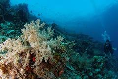Maratua礁石 免版税库存照片