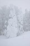 Maravilha do inverno nas árvores da montanha Imagens de Stock