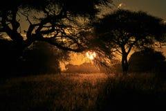 Maravilha do por do sol - natureza e fundo africanos da beleza Imagens de Stock Royalty Free
