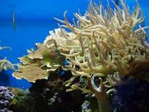 Maravilhas do mar Imagem de Stock Royalty Free