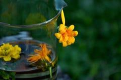 Maravilla con las flores y la menta del Calendula fotografía de archivo libre de regalías