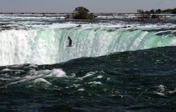 Maravilla de la cascada de Niagra Imagen de archivo