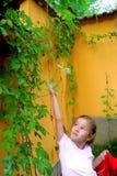 Maravilla de la muchacha Imagenes de archivo