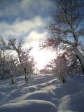 Maravilla del invierno Fotografía de archivo libre de regalías