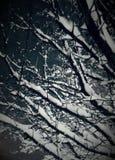 Maravilla del invierno imagenes de archivo