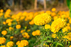 Maravilla en el campo de flor Fotos de archivo