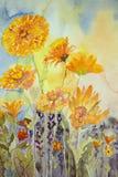 Maravilla en el campo Pintura de la acuarela Imagen de archivo libre de regalías