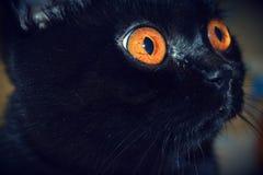 Maravilla en los ojos Fotos de archivo libres de regalías