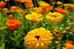 Maravillas en un jardín Foto de archivo libre de regalías