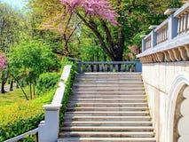 Marbel台阶和栏杆在有绿色和紫色开花的树的一个公园 库存照片