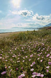 Marbella beach with flowers. And blue cloudy day with a few mountains in the background Stock Photo