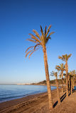 Marbella Beach With Palm Trees. Spain, Marbella, beach with palm trees on Costa del Sol at Mediterranean Sea Royalty Free Stock Photography