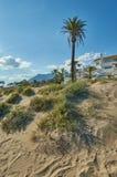 Marbella duinen met palmtree en berg Stock Foto's