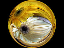 Marble. Yellow marble with gerbera daisies Royalty Free Stock Photography