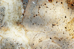Marble brown background texture - detail Stock Photos