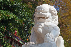Marble chinese lion Stock Images