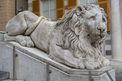 Marble lion. Under the cathedral of San Lorenzo in Genoa, Italy Stock Photography