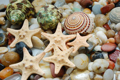 Marble pebbles and seastars Stock Photo