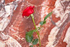 Marble and rose Stock Photography