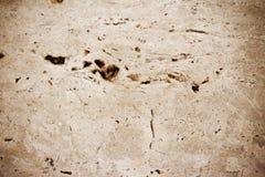 Marble stone floor Stock Photos