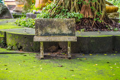 Marble table bench under tree. Royalty Free Stock Photography