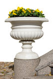 Marble vase with yellow pansies Stock Photos