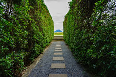 Marble walkway Two sides of the tree Stock Photo