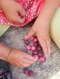 Marbles - little children hands playing pink and violet marbles stock image