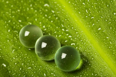 Marbles on wet leaf Royalty Free Stock Photo