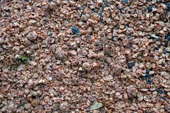 Marc of grapes or pomace on a pile as byproduct and garbage in winery.