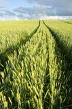 Marca agrícola de la rueda de coche del trigo del campo del fondo Imagen de archivo