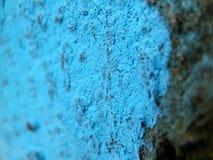 Marca azul en la corteza del árbol en bosque Foto de archivo