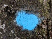 Marca azul en la corteza del árbol en bosque Imagen de archivo