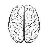 Marca blanco y negro del cerebro del esquema de la visión superior Fotografía de archivo