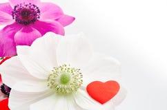Marca de la anémona y del corazón Fotografía de archivo libre de regalías