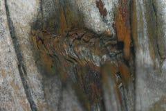 Marca de madeira de dano Foto de Stock