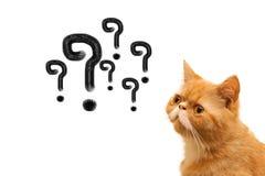 Marca e gato de Quation Imagens de Stock Royalty Free
